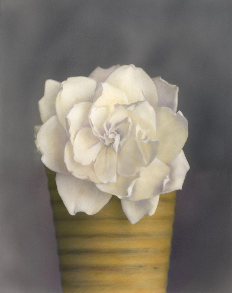 Gardenia in Yellow Pot