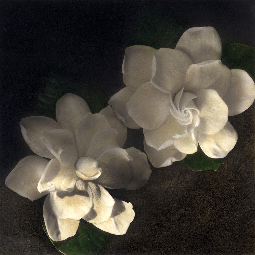 Two Gardenias