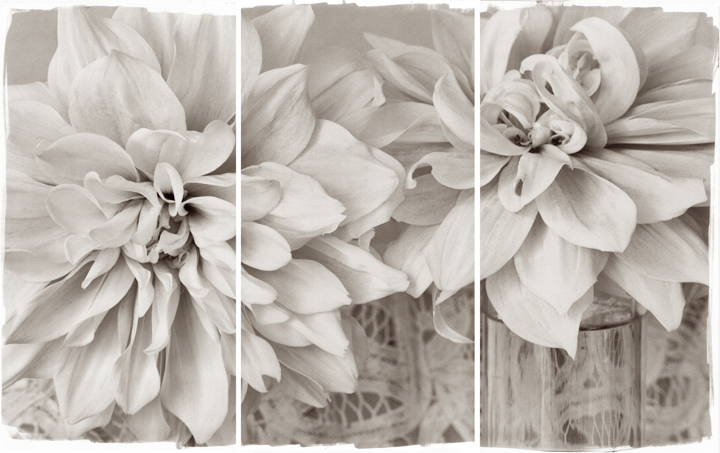 Lace Dahlias I