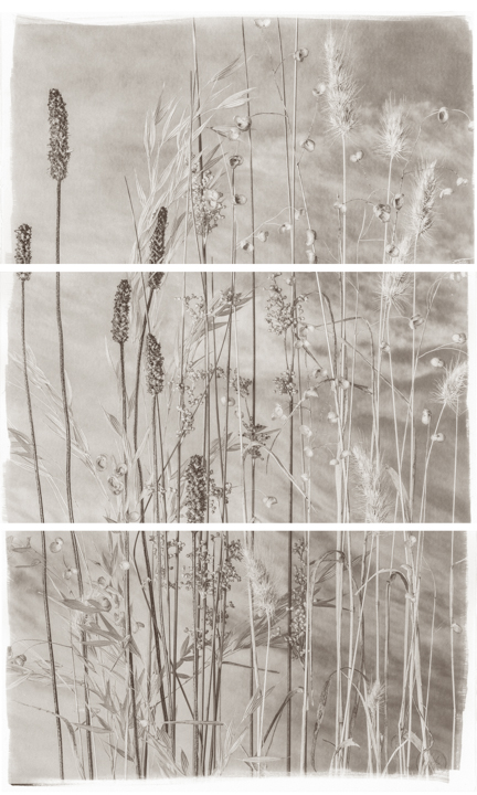 Valley Grasses VI