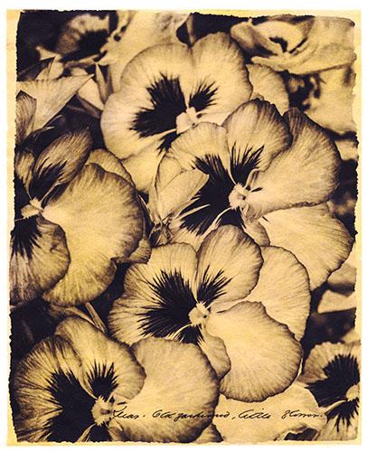 Dear Old-Fashioned, Little Flower