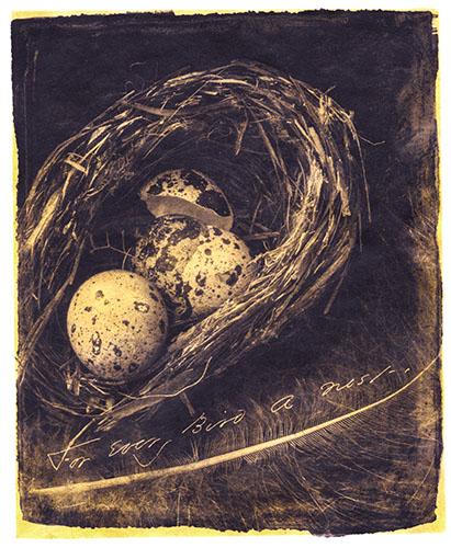 For Every Bird A Nest