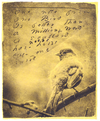 One Note from One Bird