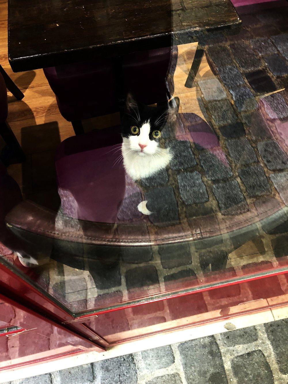 Un Chat du Marais