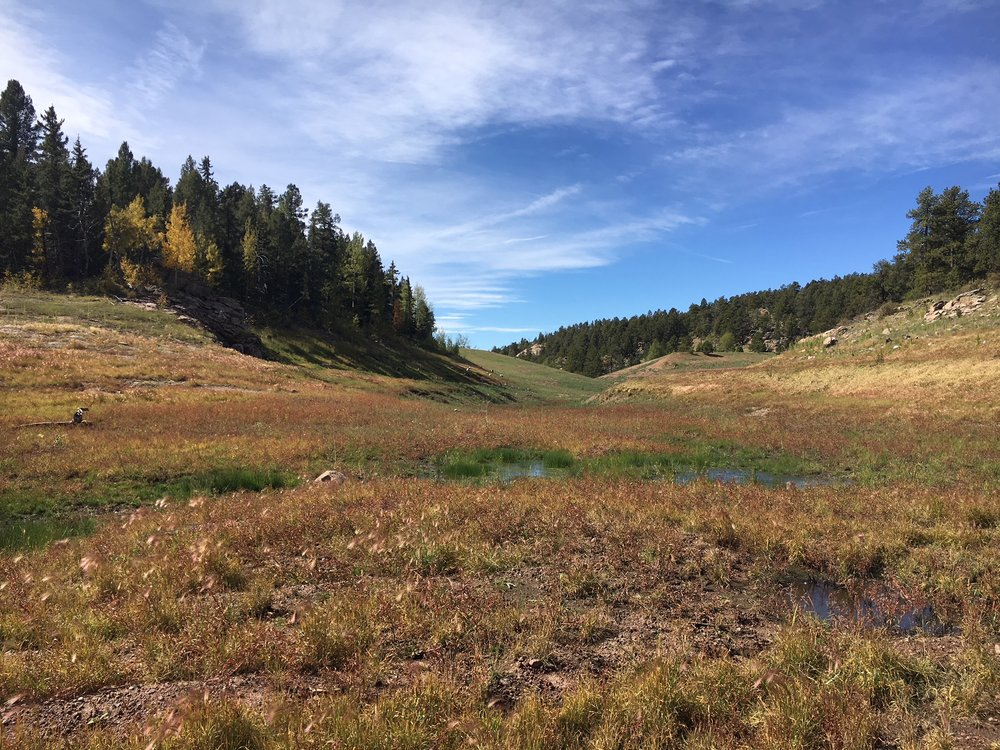 Riss Reservoir South - On the same ranch as Riss Reservoir North, we had to breach an earthen dam to drain the seven acre lake. We developed a restoration plan for the newly exposed lake bottom that included native revegetation for upland, wetland, and stream habitat.