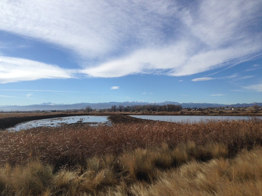 Wellington Wetlands - Western Lands worked as part of a design-build team to develop five acres of newly created waterfowl habitat for the Colorado Division of Parks and Wildlife. Two impoundments were created to be actively managed for optimized habitat on State Wildlife Areas.