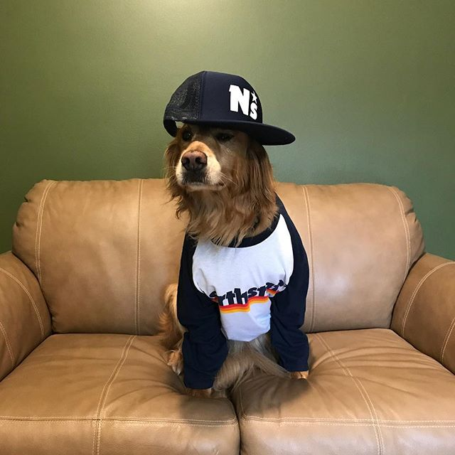 This old dog knows what's up. Go grab a shirt in our official store - www.northstate.band Pickup a hat too while you're there. Don't be outdone by a dog. I mean c'mon...