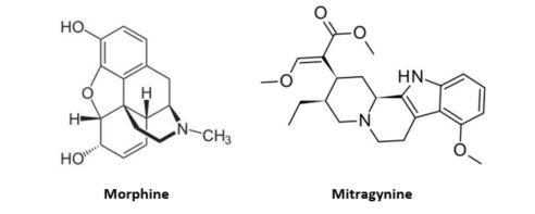 Morphine-Mitragynine.jpg