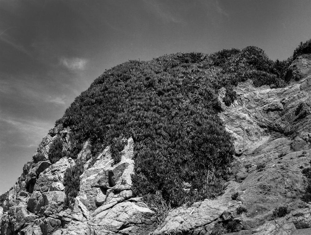 california, redwoods328.png