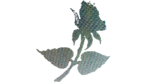 rose-solids-cocoNsm.png