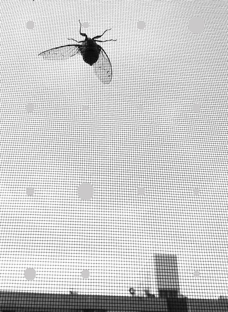 YYOO-Cicada+Sky+BW03.jpg