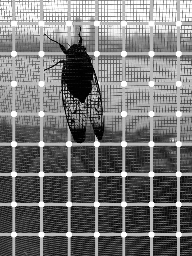 YYOO-Cicada+Tree+BW04.jpg