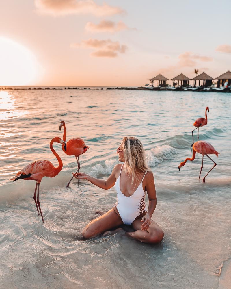 aruba-pink-flamingos.jpg