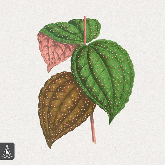 Here's a sneak peak of what is included in the tropical foliage illustrations pack. This resource collection has 42 vivid high resolution illustrations perfect for your creative projects! Link in bio • • • #artistsarchive #tropicalfoliage #artist #illustrations #design #trend #blog #tropical #plants #art