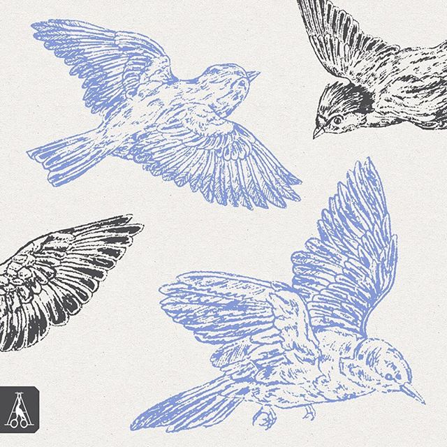 Here's a few images from my bird drawings illustrations pack. This resource collection has 8 hand drawn song bird illustrations perfect for your creative projects! Link in bio • • • #artistsarchive #songbird #artist #illustrations #design #trend #blog #birds #drawings #birdsdrawings #art