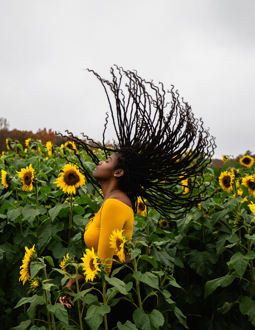 For the Love of Sunflowers