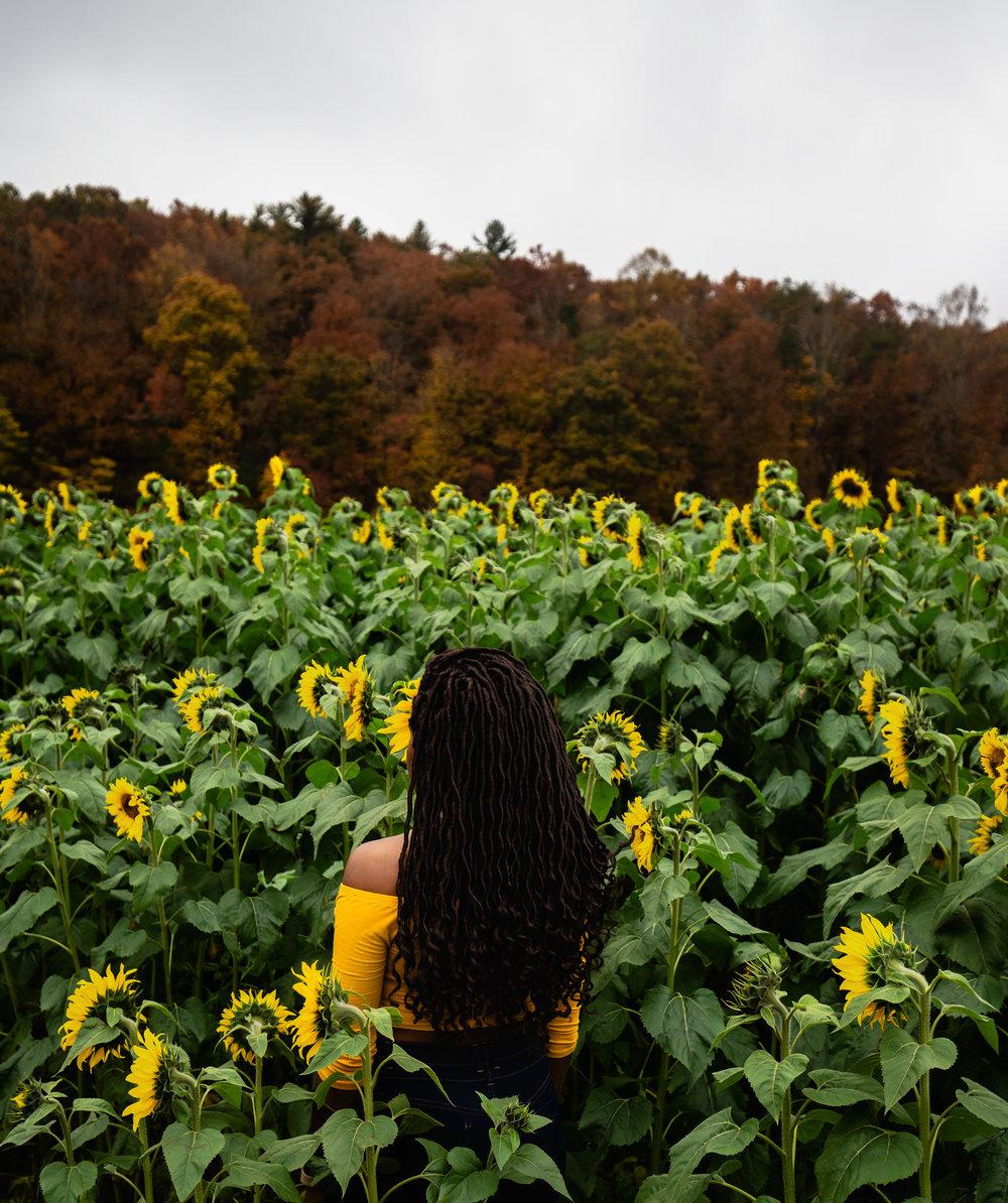Sunflower-Field-63.jpg