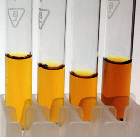 An example of the Acetone Test. The results indicate: Noble kava on the extreme left, Tudei kava on the extreme right and mixed kava on its left (photo courtesy of Garry Stoner)