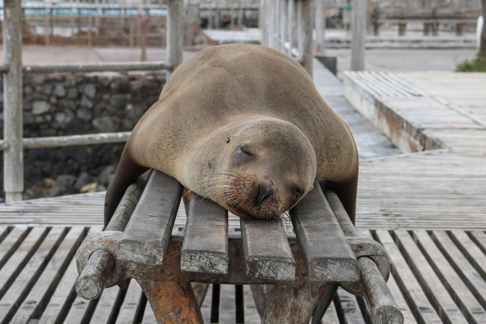 sleeping seal