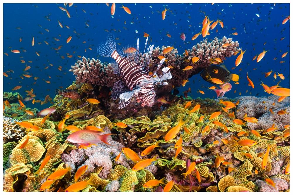 Mediterranean Lifestyle - Koyunseven.com3.jpg