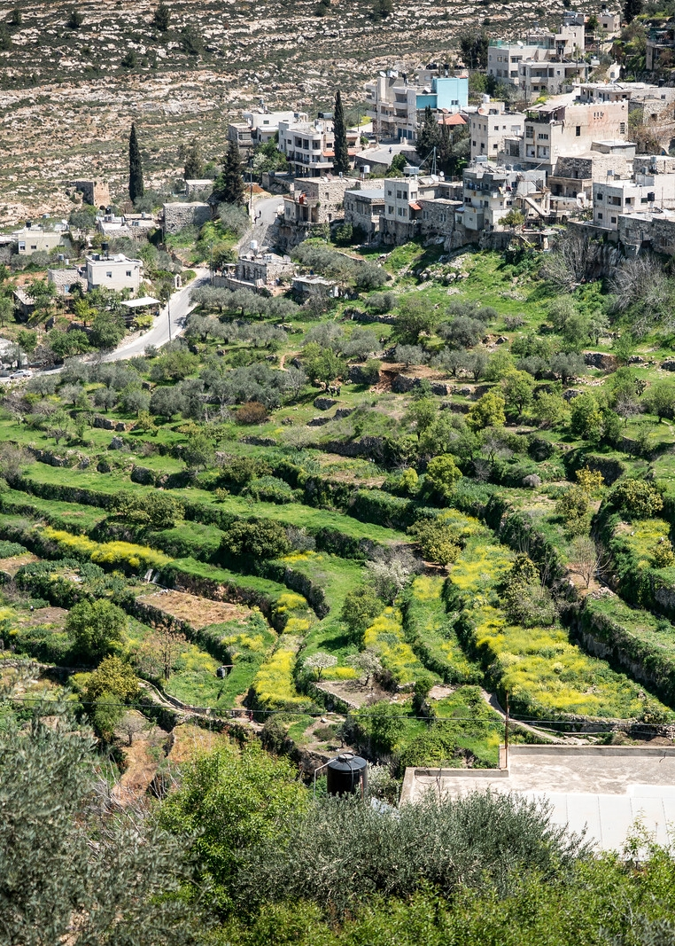 Land of Olives and Vines – Cultural Landscape of Southern Jerusalem, Battir - Palestine -