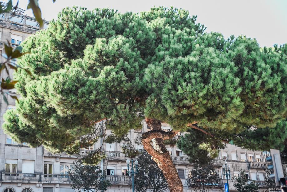 WebQuality-Porto-10yearsVentigrate-AnaisStoelenPhotography-183.jpg