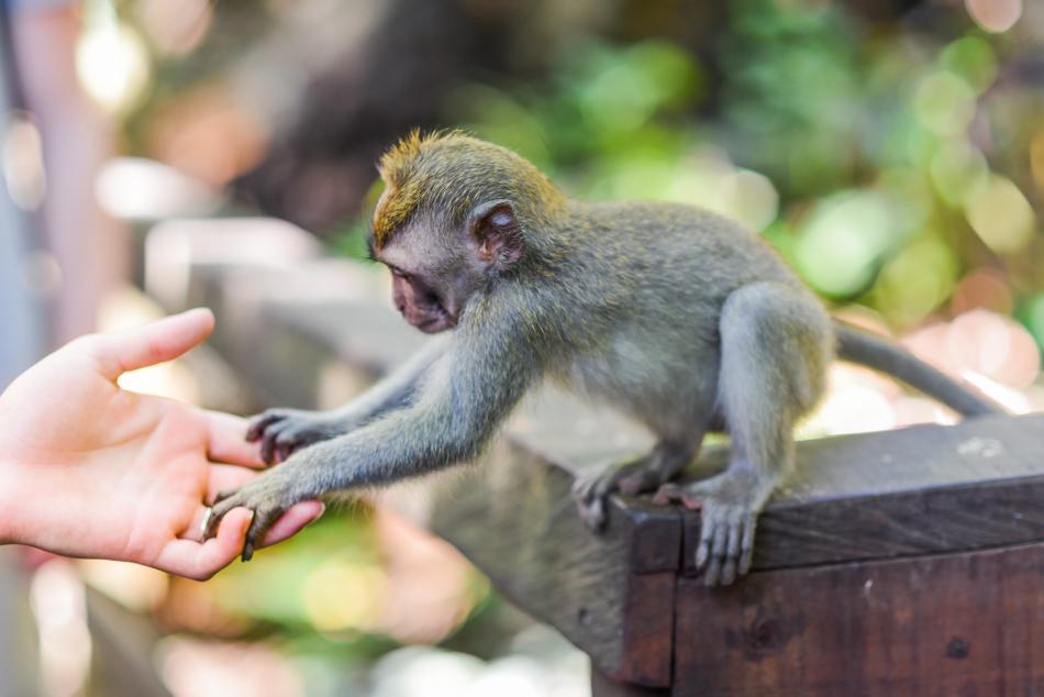 Bali-Honeymoon-Travel-AnaisStoelen-16.jpg