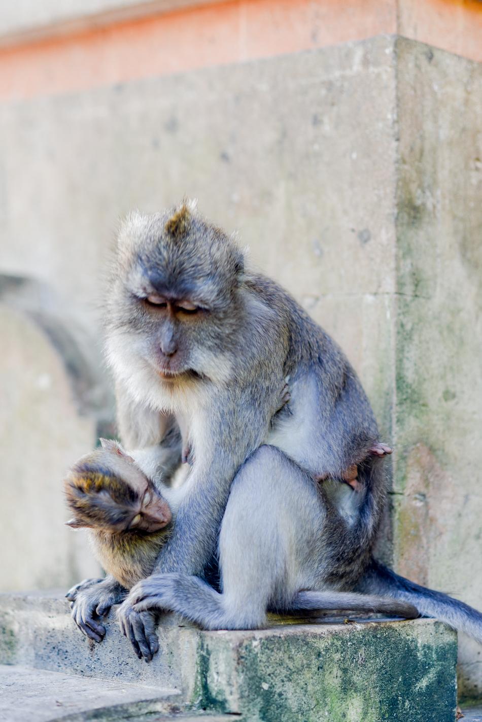 Bali-Honeymoon-Travel-AnaisStoelen-15.jpg