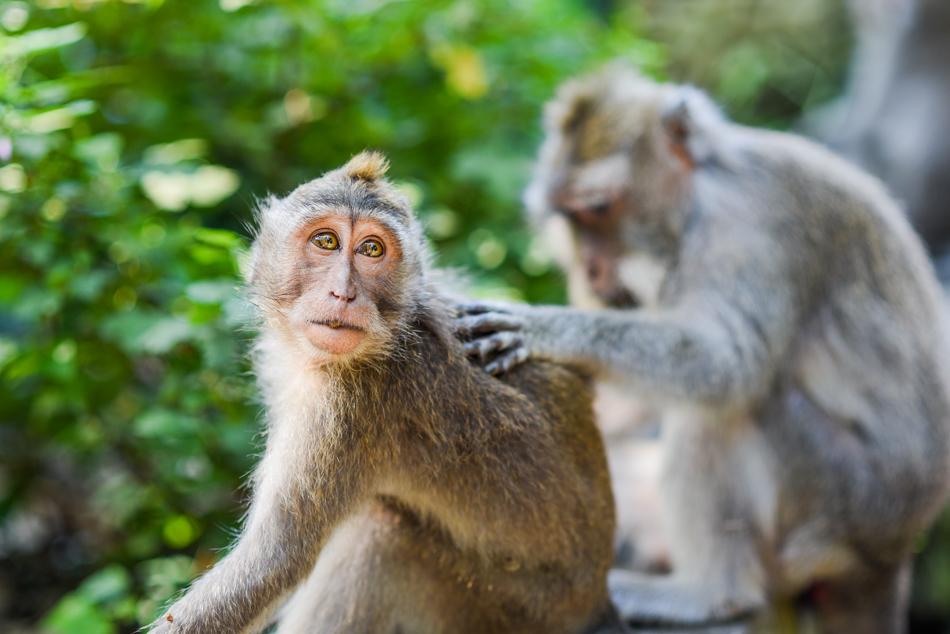 Bali-Honeymoon-Travel-AnaisStoelen-18.jpg