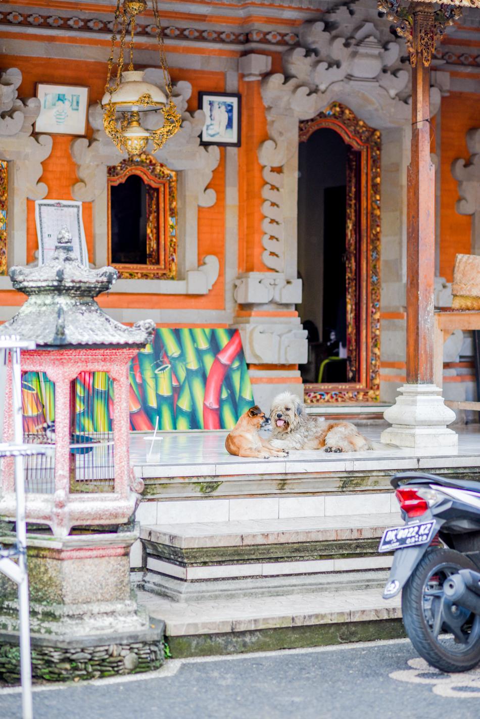 Bali-Honeymoon-Travel-AnaisStoelen-20.jpg