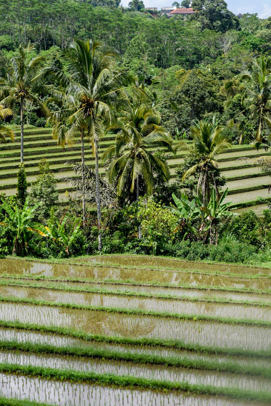 Bali-Honeymoon-Travel-AnaisStoelen-50.jpg