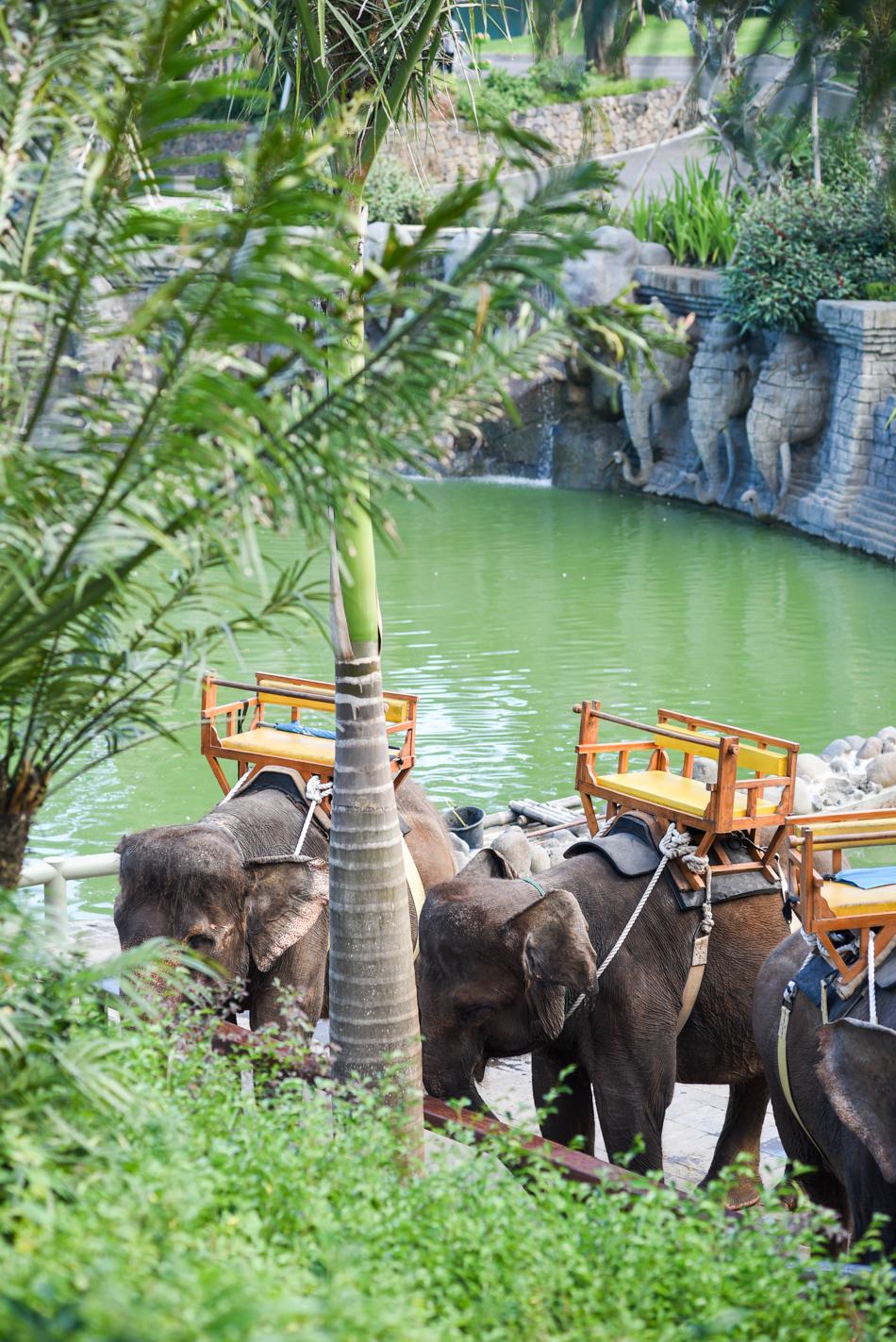 Bali-Honeymoon-Travel-AnaisStoelen-100.jpg