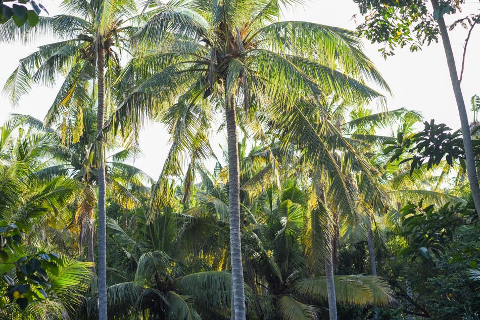 Bali-Honeymoon-Travel-AnaisStoelen-129.jpg