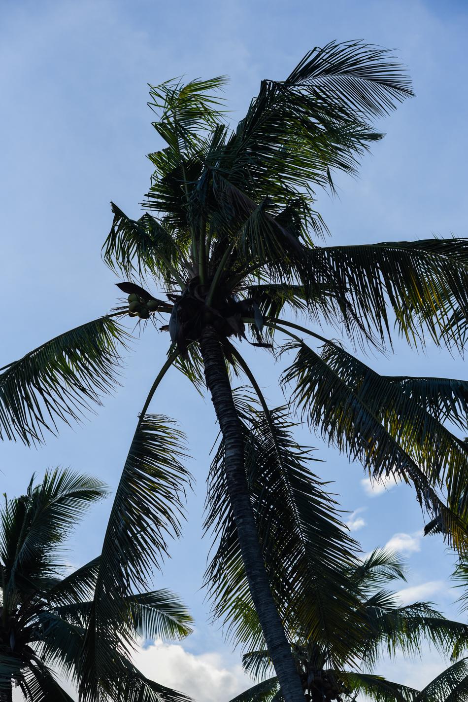 Bali-Honeymoon-Travel-AnaisStoelen-131.jpg