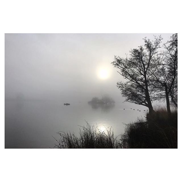 'on misty rise' new old beginnings stillness a moment at a time new old beginnings listen to flutters deep inside new old beginnings except  when they are not