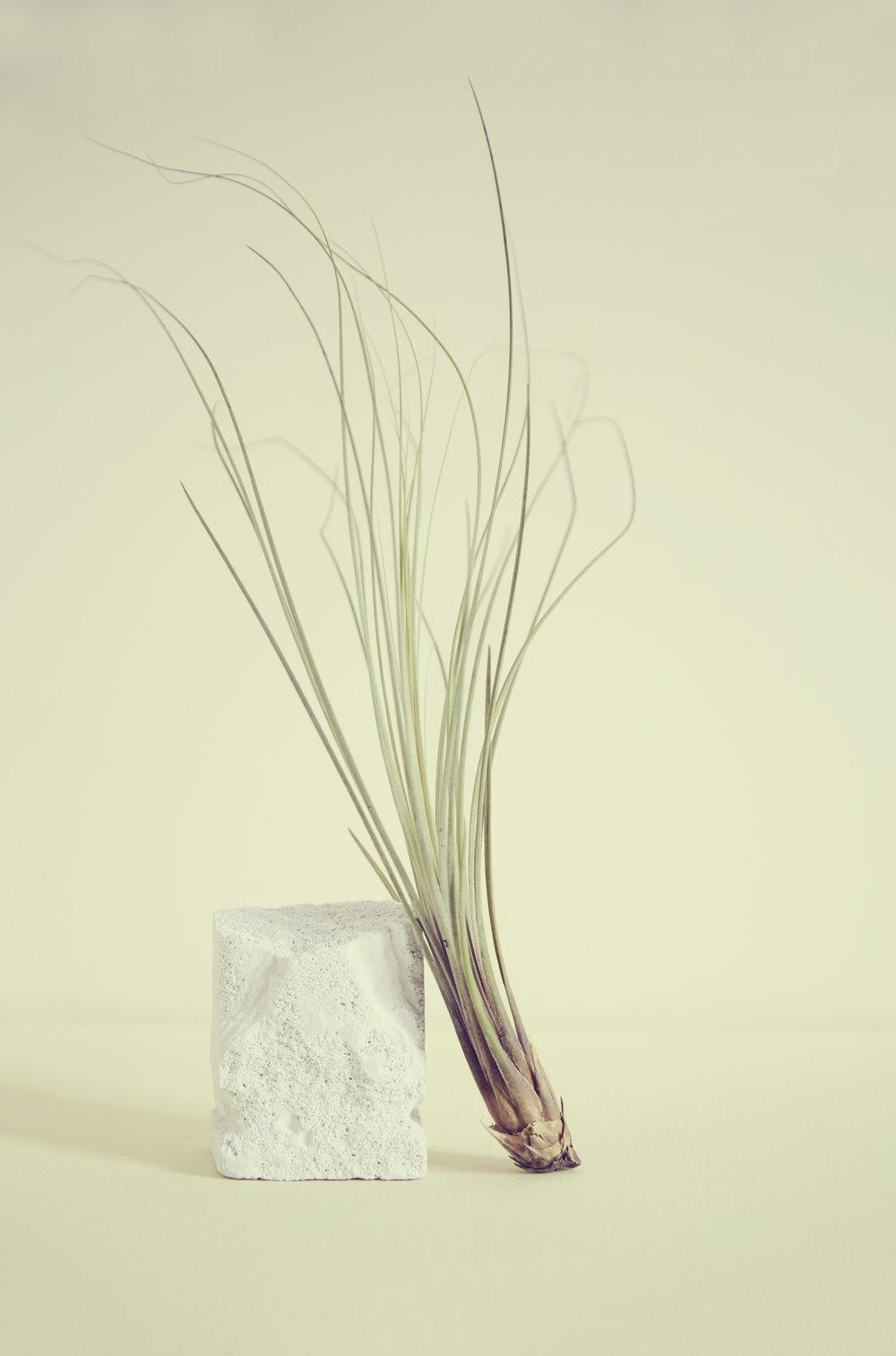 //    Concrete & Epiphyte