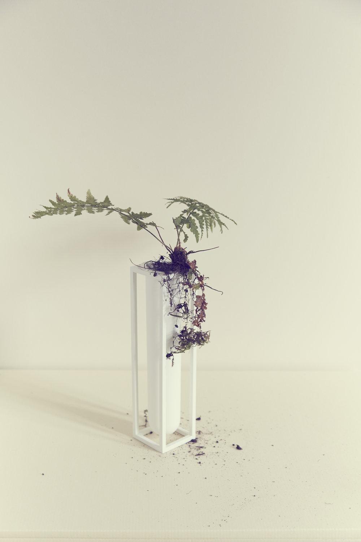 //     Fern & Vase - By Lassen