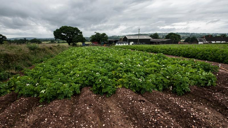 Farm_13.jpg
