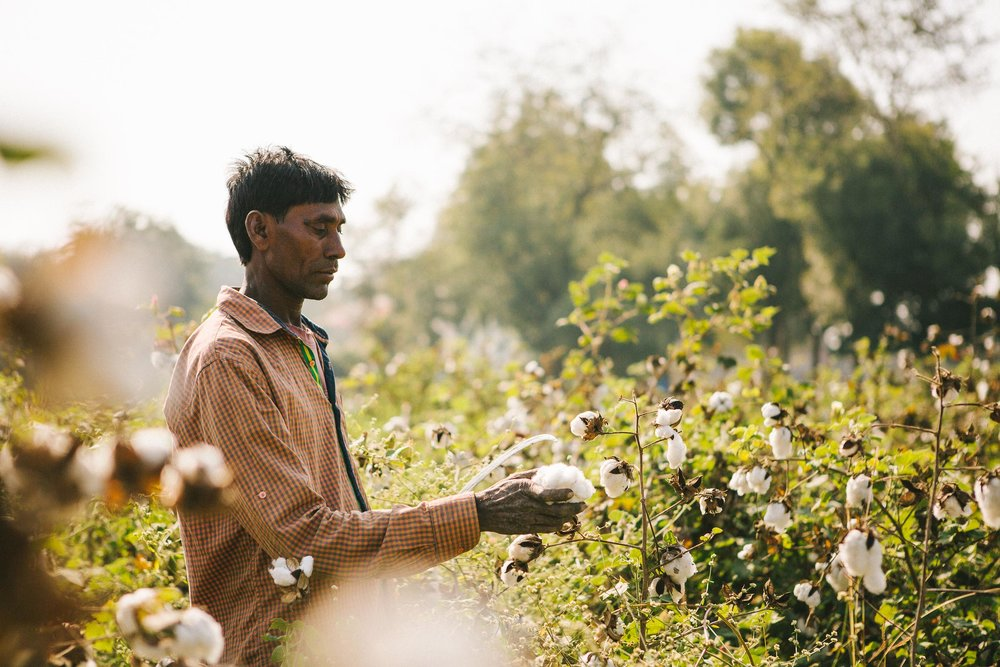 Rapanui_India_Cotton_January_2018-9.jpg