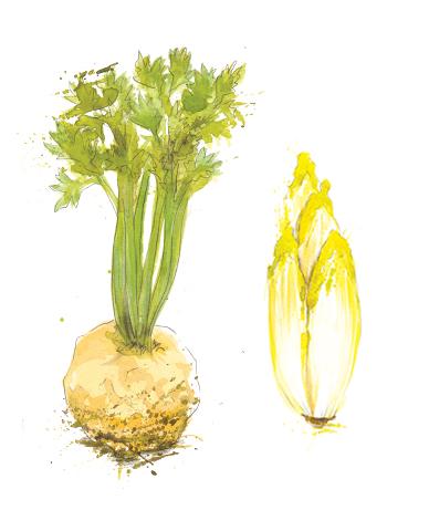 Chicory & Celariac.jpg