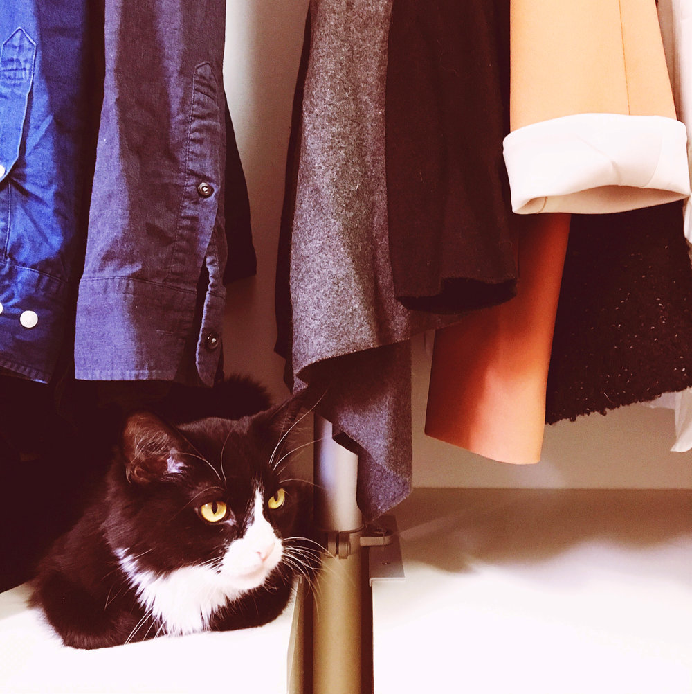 THE FUNKY FRESH / CLOSET KITTY