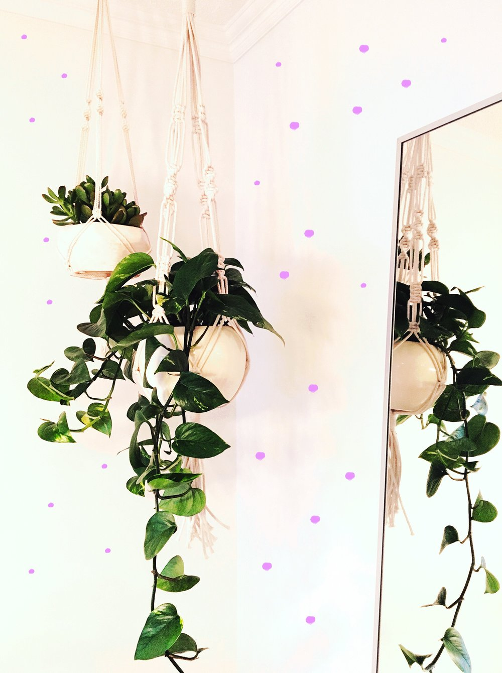 THE FUNKY FRESH / MACRAME HANGING PLANTS