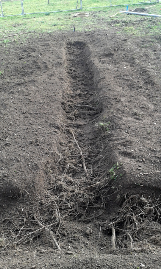 Tree Root Decompaction