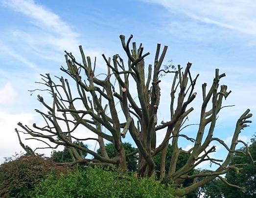 Eucalyptus After