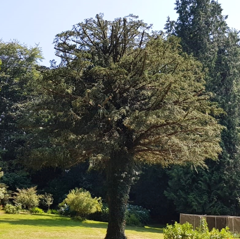 Crown Canopy Reduction After
