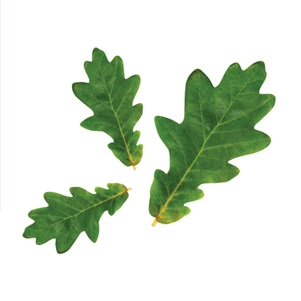 3 Leaf Logo.jpg