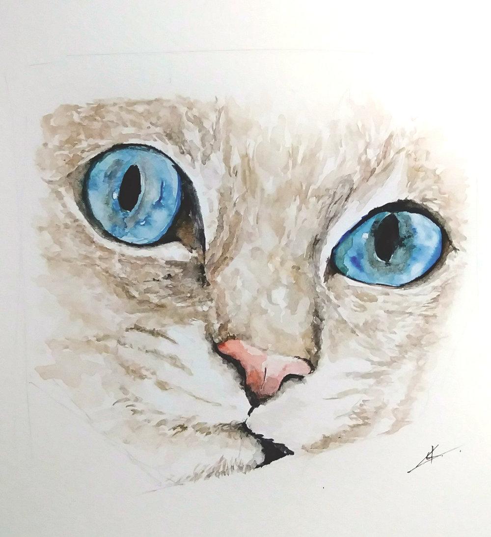 Cat Study (2018)