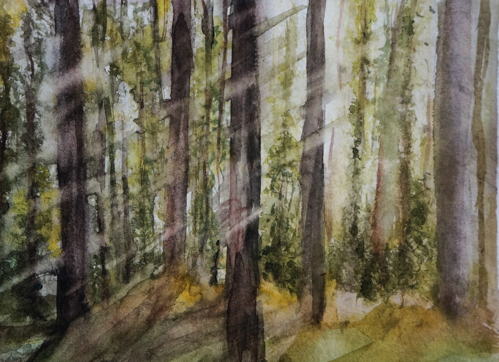Sunrise Forest (2017)
