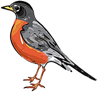 "An artist's rendering of the robin in question. If you see this little bird tell it, ""Glad you're safe, hombre."""
