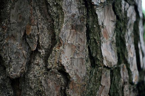 bark at park.jpg